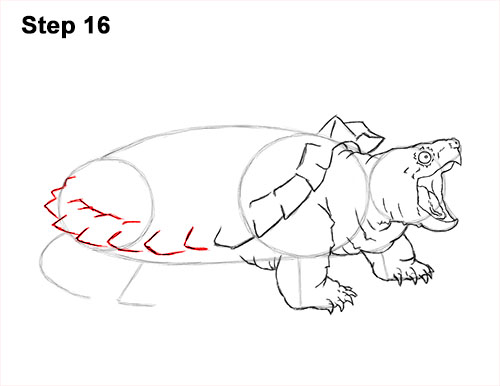 How to Draw Alligator Snapping Turtle Snapper 16