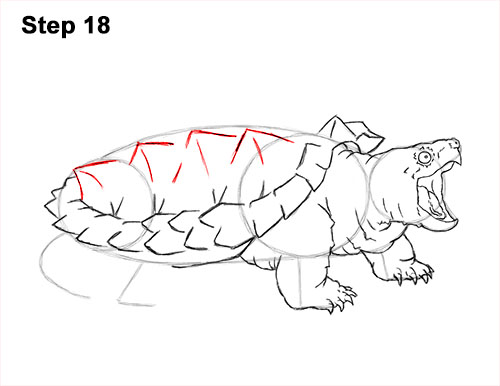 How to Draw Alligator Snapping Turtle Snapper 18