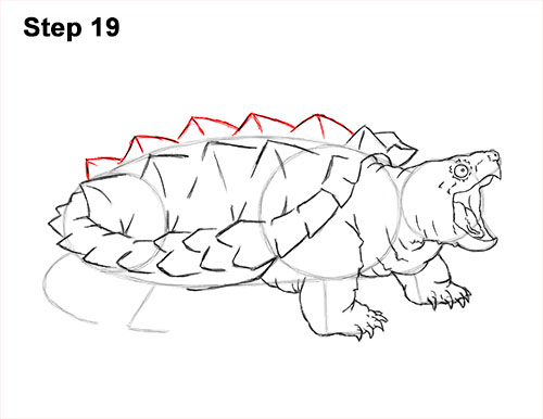 How to Draw Alligator Snapping Turtle Snapper 19