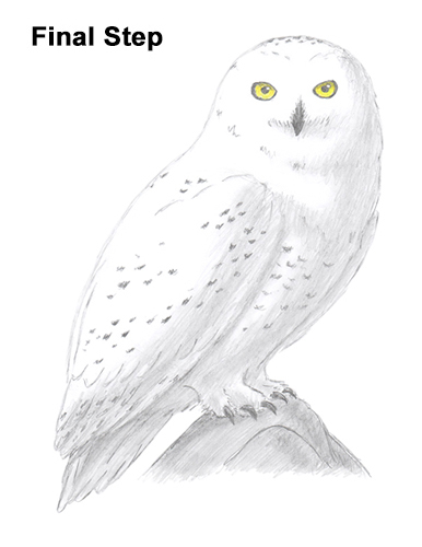 How to draw a snowy owl for Draw the owl