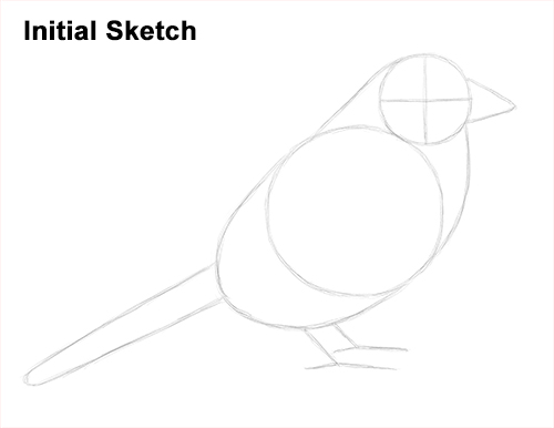 Draw House Sparrow Bird Initial Sketch