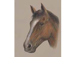 Horse Portrait Head Special Drawing
