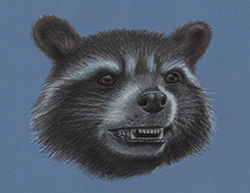 Rocket Raccoon Special Portrait Drawing Guardians of the Galaxy