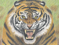 Special Portrait Drawing Tiger Roaring