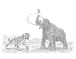Smilodon Saber-Toothed Cat vs. Mammoth Special Drawing