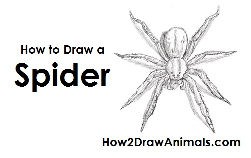 How To Draw A Jaguar furthermore How To Draw Mr Mime From Pokemon as well How To Draw A Hammerhead Shark as well How To Draw A Broken Heart Tattoo furthermore 26 Draw Spider. on steps of making a pencil