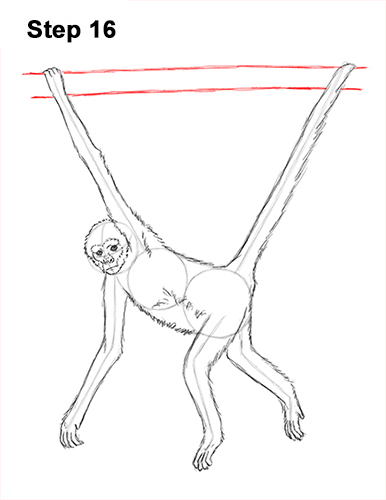 Draw Spider Monkey 16