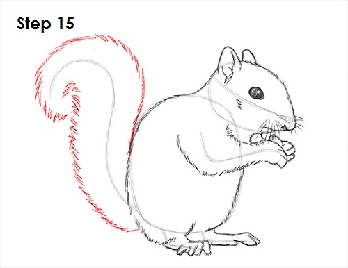 draw squirrel 15