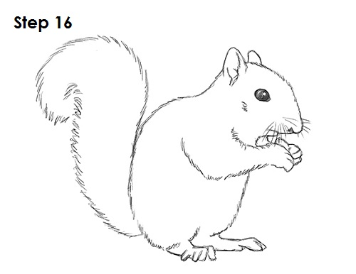Draw Squirrel 16