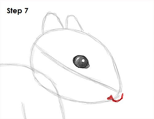 Draw Squirrel 7