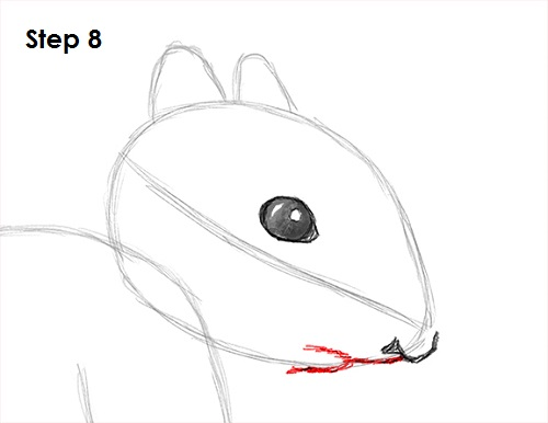 Draw Squirrel 8