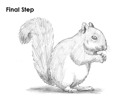 Draw Squirrel Final