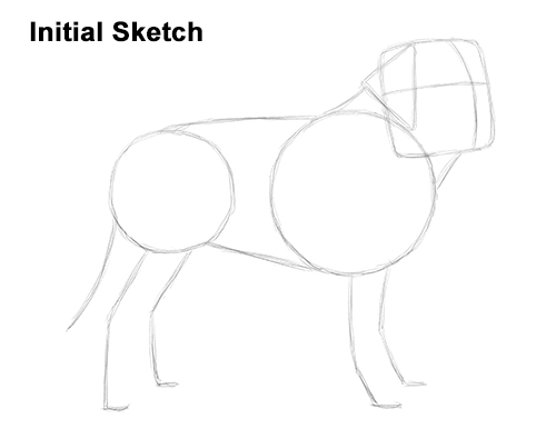 Draw St. Bernard Dog Sketch