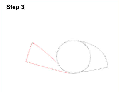 How to Draw a southern common Stingray swimming 3