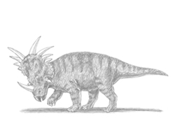 How to Draw a Styracosaurus Dinosaur