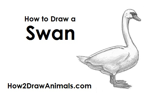 please pause the how to draw a swan video after each step to draw at your own pace