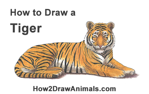 How to Draw a Tiger Color Side Laying Lying Down