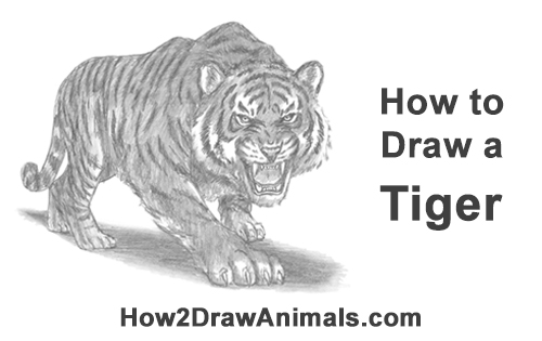 How to Draw a Mean Tiger Roaring Growling Stalking