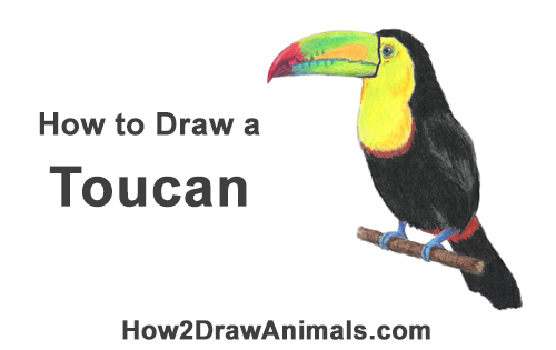 Toucan Bird Drawing How To Draw A Toucan