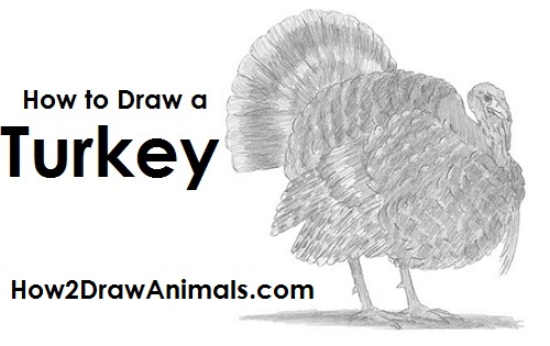 Draw a Turkey