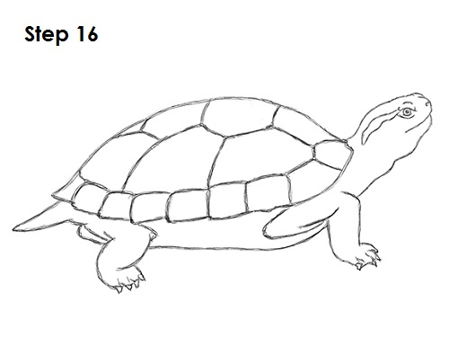 how to draw a turtle red eared slider