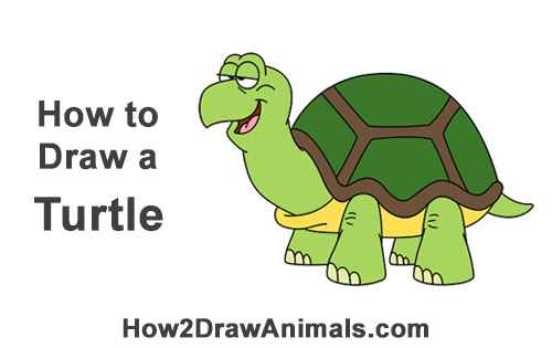 How To Draw A Turtle Tortoise Cartoon