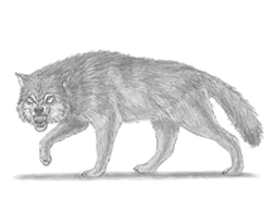 How to Draw a Growling Wolf
