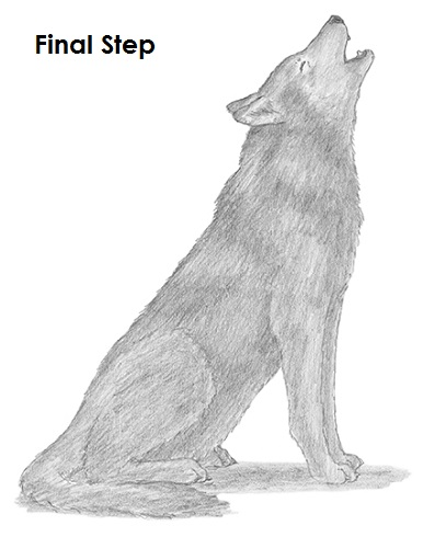 How To Draw Wolf Howling