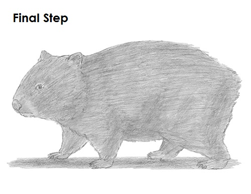 how to draw a wombat step by step easy