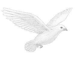 How to Draw a Dove Flying Wings