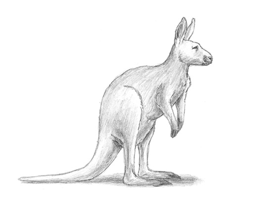 Line Drawing Kangaroo : Kangaroo drawing