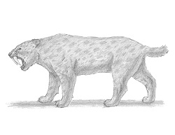 How to Draw a Smilodon
