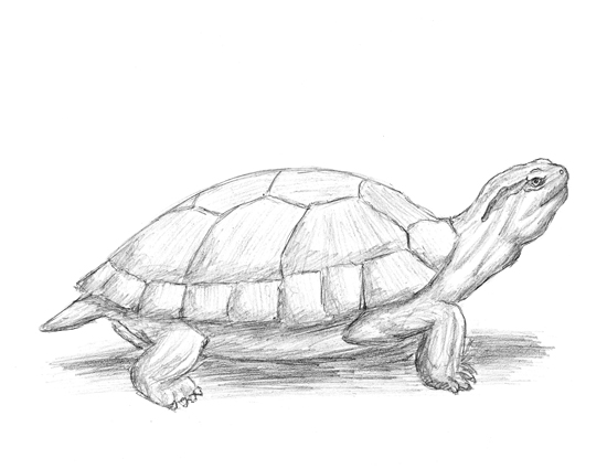 29 Draw Red Eared Slider Turtle furthermore Foot Reflexology Massage furthermore Bracing Sequence besides Lesson 4 Section 2A further 2 03 Positioning The Patient. on head of pressure to feet