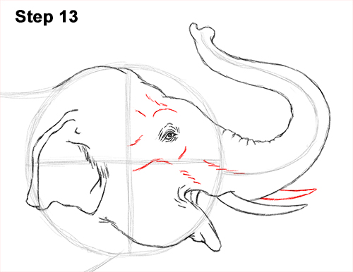 Draw Asian Elephant 13