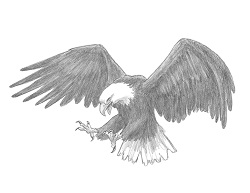 How to Draw a Bald Eagle Flying Hunting