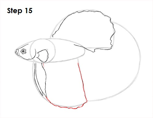 Draw Betta Fish 15