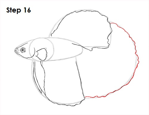 Draw Betta Fish 16