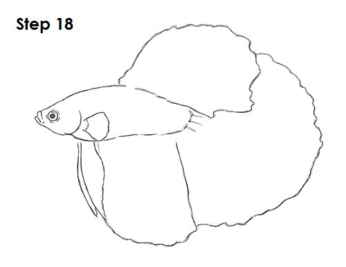 Draw Betta Fish 18