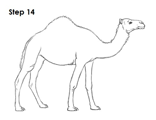 How to Draw a Camel
