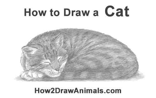 How to Draw a Cat Kitten Sleeping