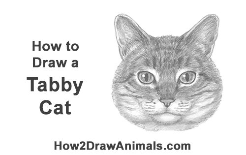 How to Draw a Tabby Kitty Cat Head Detail
