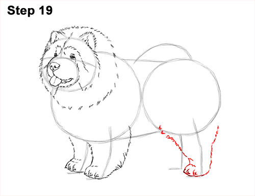 How to Draw Cute Chow Chow Puppy Dog 19