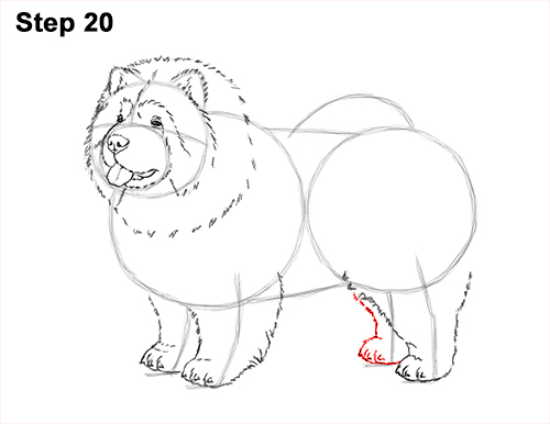 How to Draw Cute Chow Chow Puppy Dog 20
