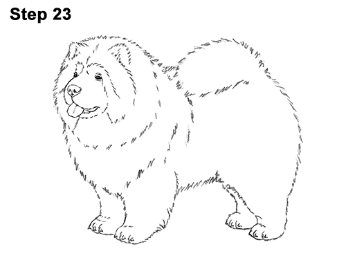 How to Draw Cute Chow Chow Puppy Dog 23