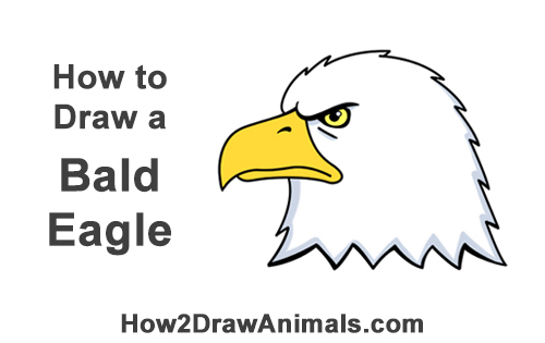 How to Draw Cool Cartoon Bald Eagle Head