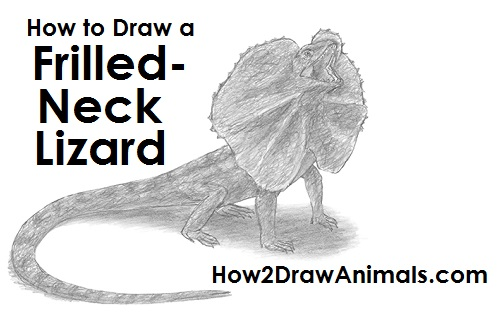 How to Draw a Frilled Neck Lizard