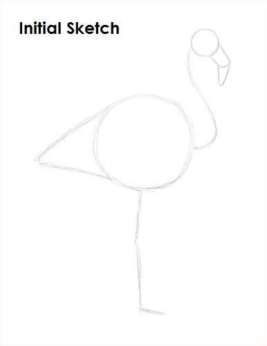 Draw Flamingo Bird Sketch