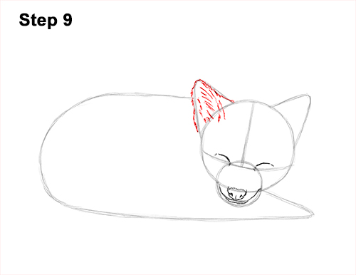 How to Draw Cute Red Fox Sleeping Asleep 9