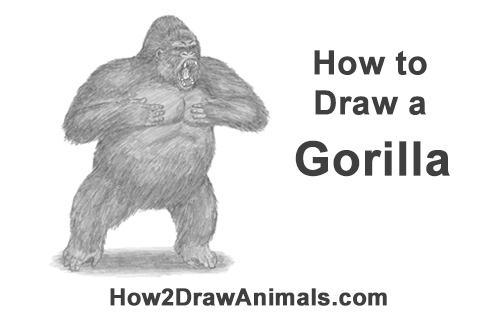 How to Draw a Gorilla Silverback Aggressive