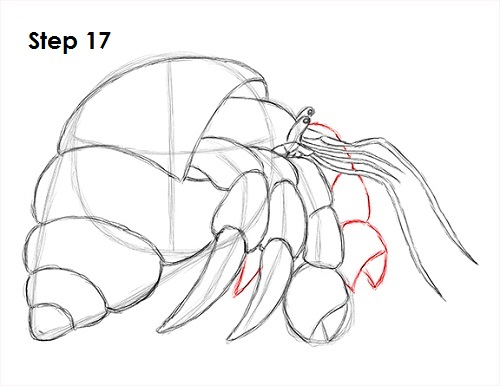 Draw Hermit Crab 17